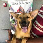 Quien ayuda a un perrito hambriento y sin hogar, ayuda su propia alma. 🤲🏼🐶