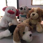¡Día internacional del perro callejero! 🐕